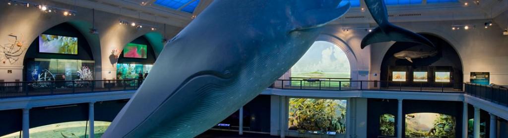 Imagem para Naiade - City Pass Museu Americano Historia Natural